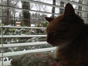 Maggie is unimpressed with snow instead of sunshine.